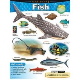 EXPLORING FISH CHART